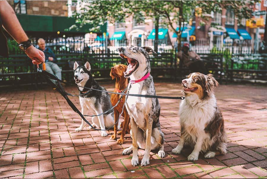 Get Emotional Support Animal Letter | Pet Support
