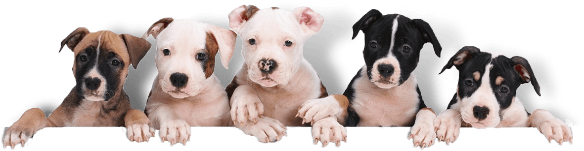 emotional support animal certification letter