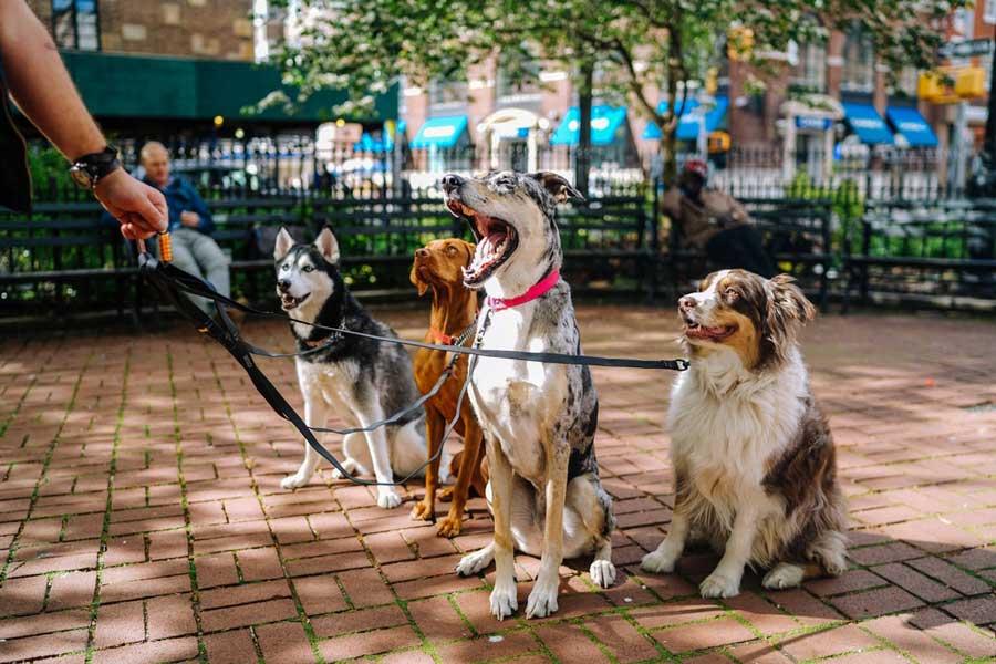 best emotional support dog breeds