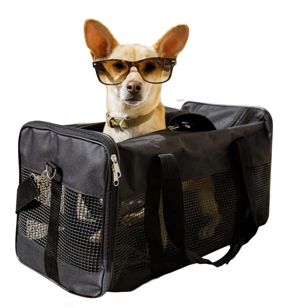 Flying with your Emotional Support Dog