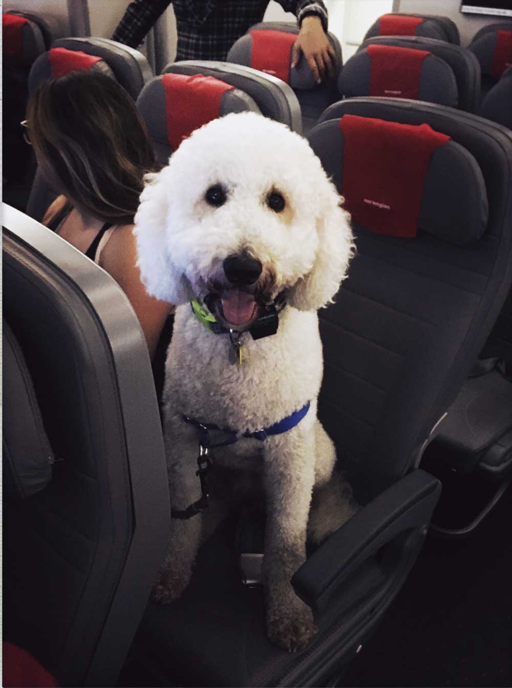 traveling with an emotional support animal on united airlines