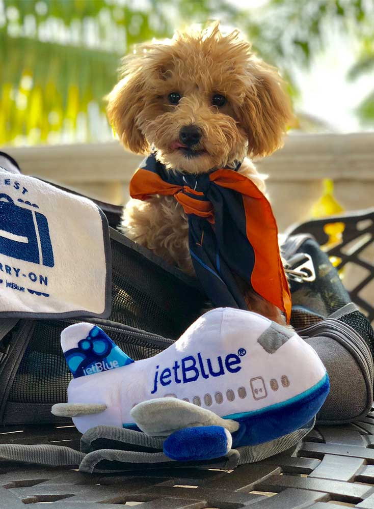JetBlue ESA Rules & Regulations You Need to Know