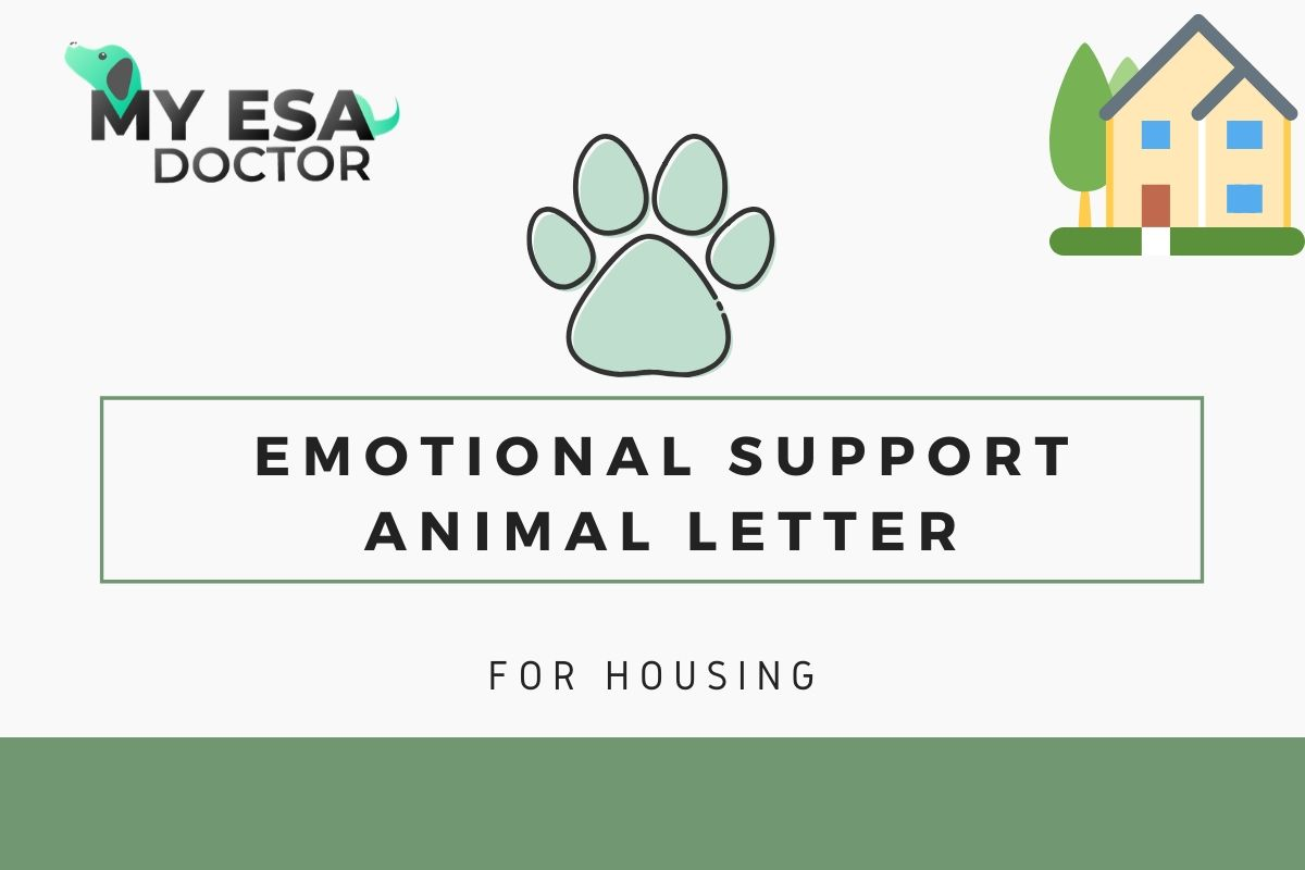 Getting An Emotional Support Animal Letter For Housing